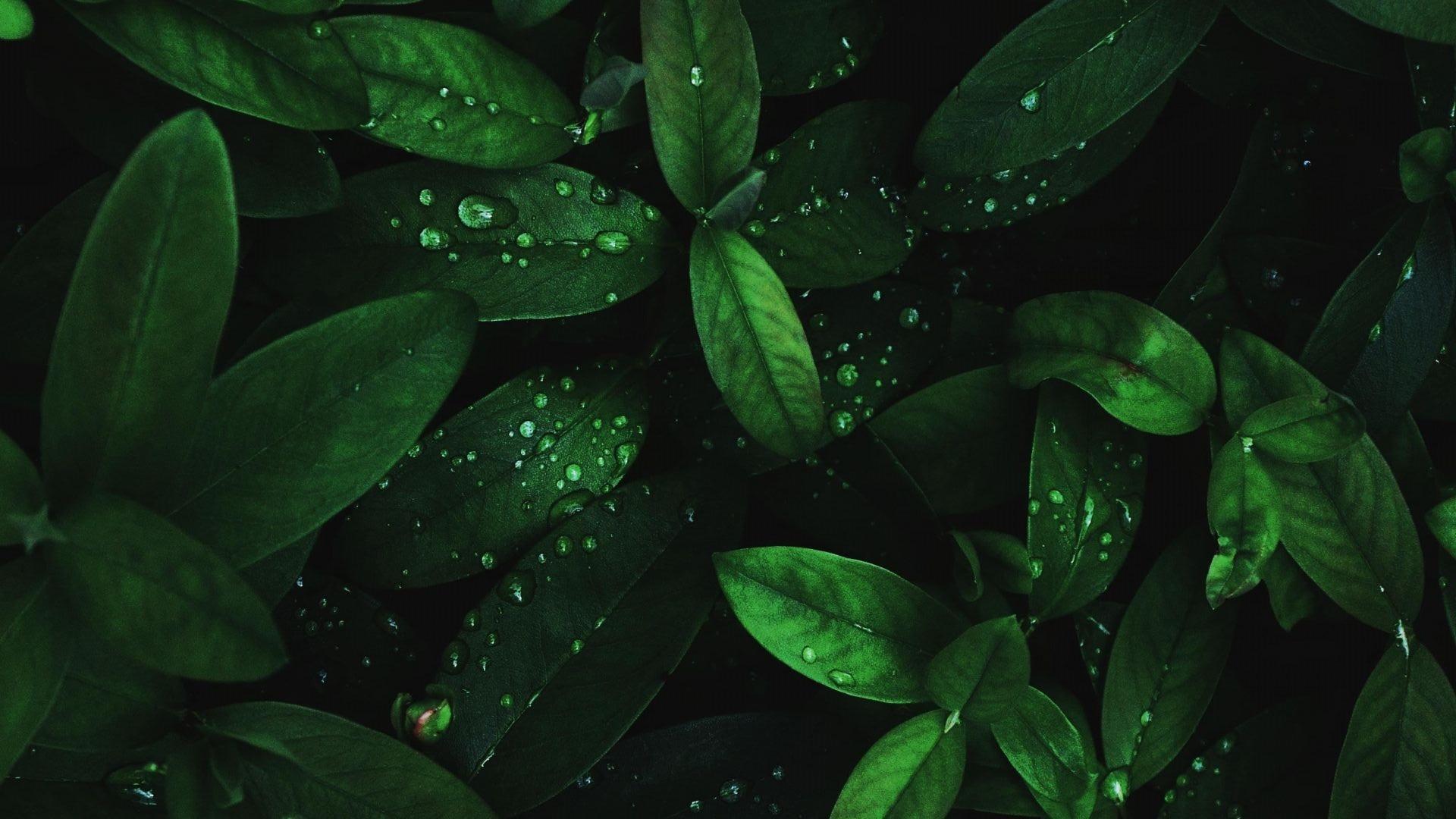 Illustration feuilles végétations pour prise de rendez-vous en ligne